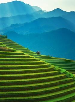 Рисовые поля на террасах му канг чай