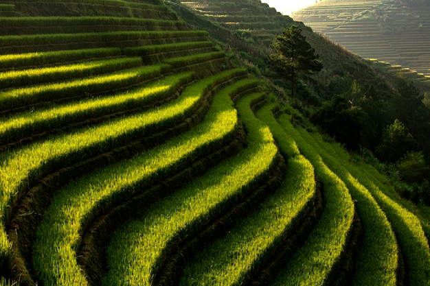 Rice fields, steps in the mountains mu cang cai,yenbai,vietnam.