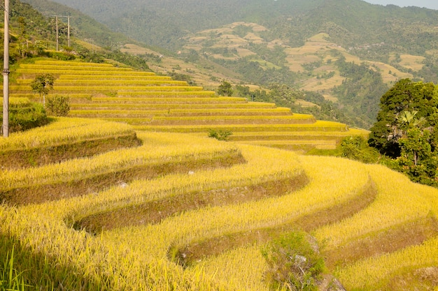 Rice fields on terraced of khuoi my, ha giang province, north vietnam