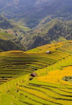 Rice fields on terraced of mu cang chai