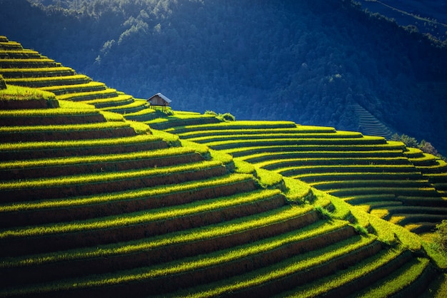 Rice fields on terraced with wooden pavilion at sunrise in mu cang chai, yenbai, vietnam.