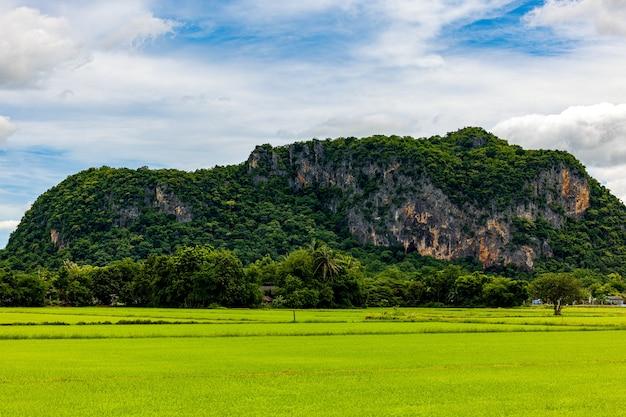 산을 배경으로 수확할 준비가 된 논, 하늘을 배경으로 하는 논 풍경