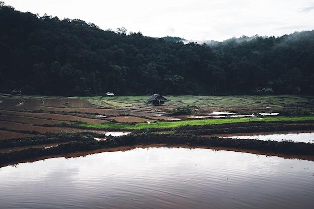 田んぼ雨季に植える前の田んぼの水。