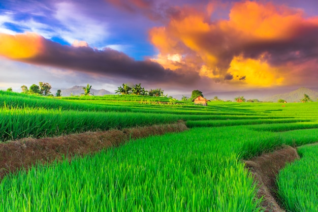 Rice fields with beautifull sky in north bengkulu