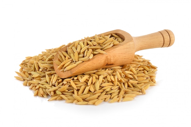 Rice grains isolated