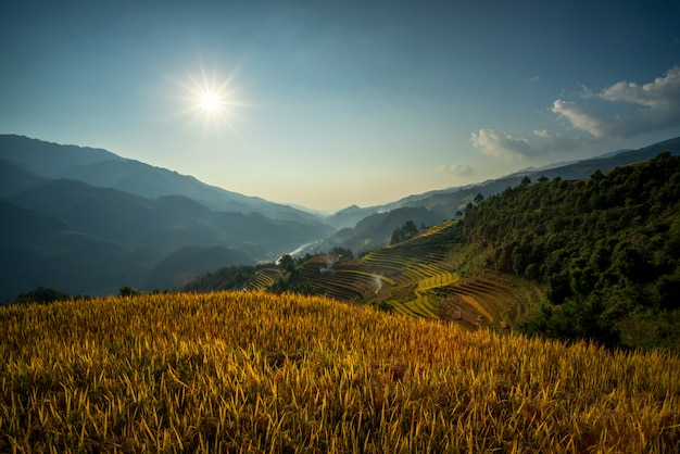 Rice green field at mucangchai vietnam