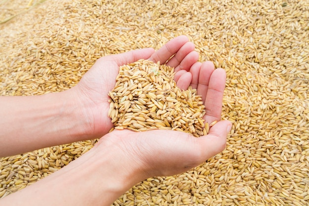 Rice for heart on hand
