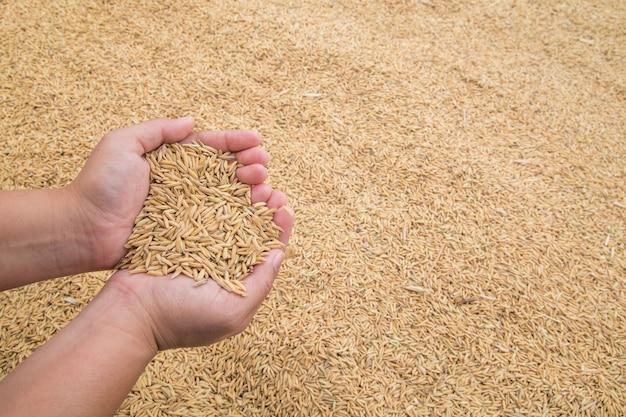 한편 쌀, 농부