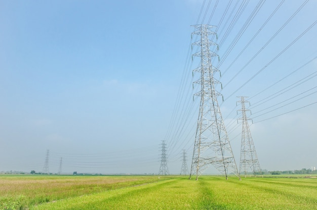 Rice paddy and electric pylon high voltage, power line transmission tower over farm