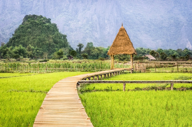 Rice paddy field in vang vieng - laos pdr - walkway to the hut