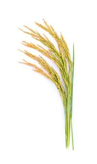 쌀 공장 흰색 절연