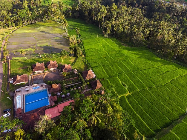 Rice plant terrace asia agriculture with resort hotel at bali indonesia