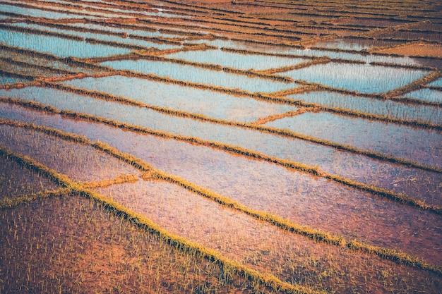 Рисовая плантация в непале. винтажный фильтр. тонирование instagram. естественный фон
