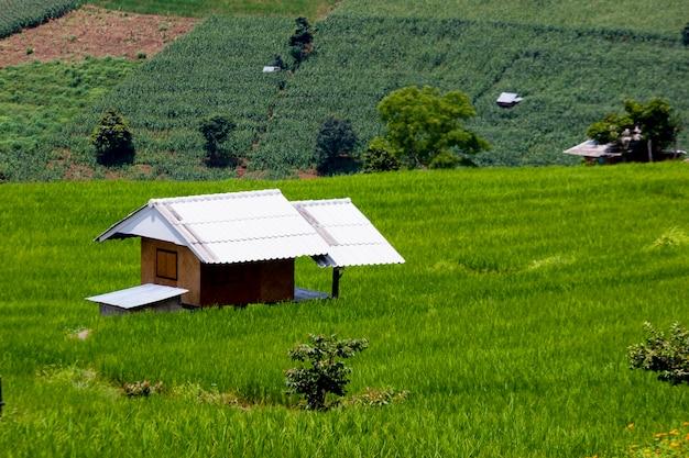 山での田植え、バンパポンピエンギンタイの棚田