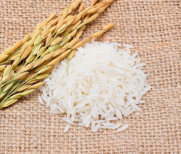 쌀 식물, 태국 재스민 쌀 알갱이