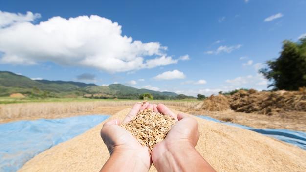 青い空を背景に農家の手でイネの種子