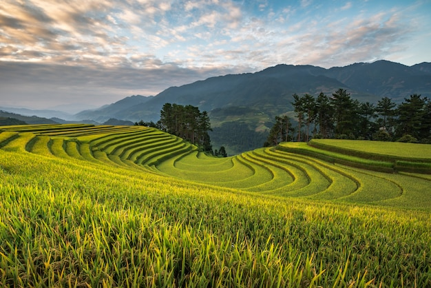 Rice terrace mountains in mu can chai, vietnam
