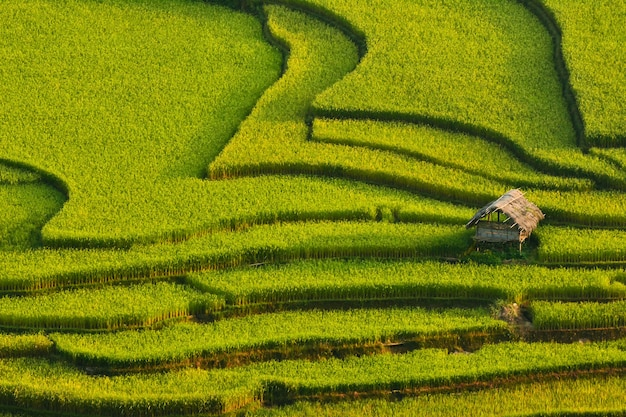 일몰시 라이스 테라스, 베트남 동북 지역