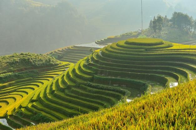 日没時の棚田、ベトナム、ベトナムの棚田、ベトナムの田んぼ、テラスの田んぼ、ムーチャンチャイの田んぼ