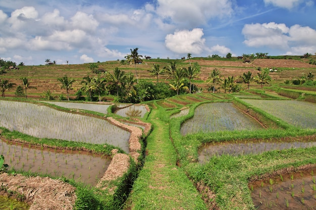 The rice terraces on bali, indonesia