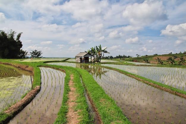 The rice terraces, bali, indonesia