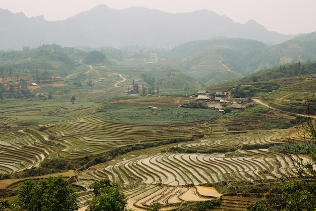 Rice terraces and hills in sapa vietnam