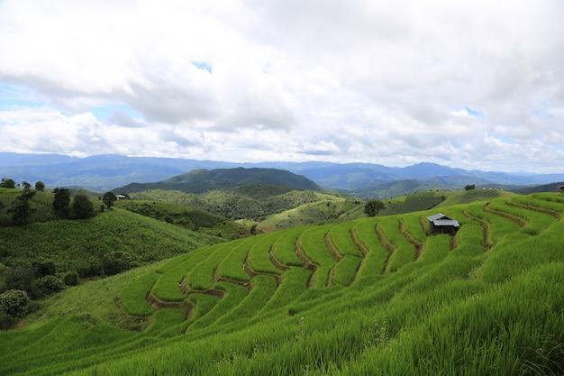 Рисовые террасы в таиланде ban pa bong biang, mae chaem, chiang mai, свежая зелень