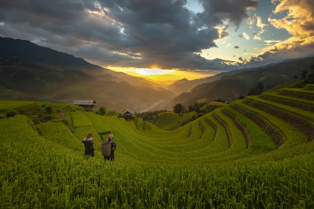 Rice terraces in the morning of the harvest season in the north of mu cang chai,yenbai, vietnam.