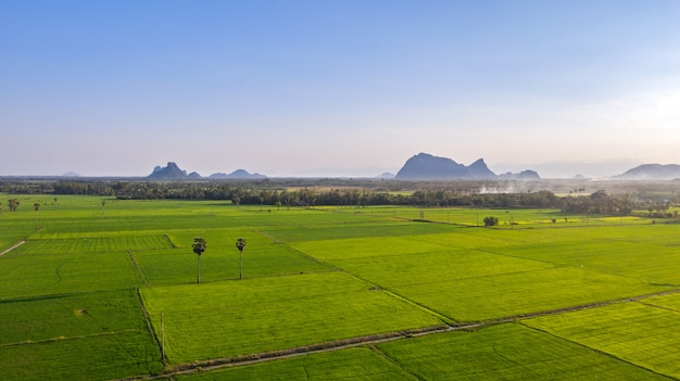 Rices paddy field