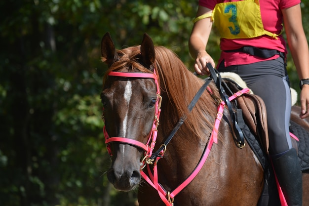 Rider trains with the horse.