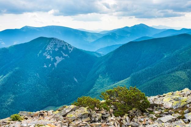 緑の森に覆われた青い山の尾根。ウクライナ、カルパティア