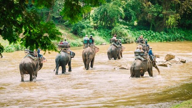 象を木に乗っていることはとても人気があります