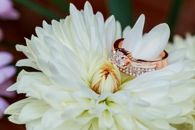 반지 발렌타인 데이 사랑 꽃 빨간색 내부 촬영 근접 촬영 다이아몬드 반지