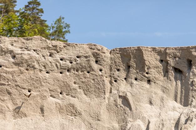 Гнездо для песчаного мартина или банка ласточки - riparia riparia - гнездовая колония на фоне голубого неба