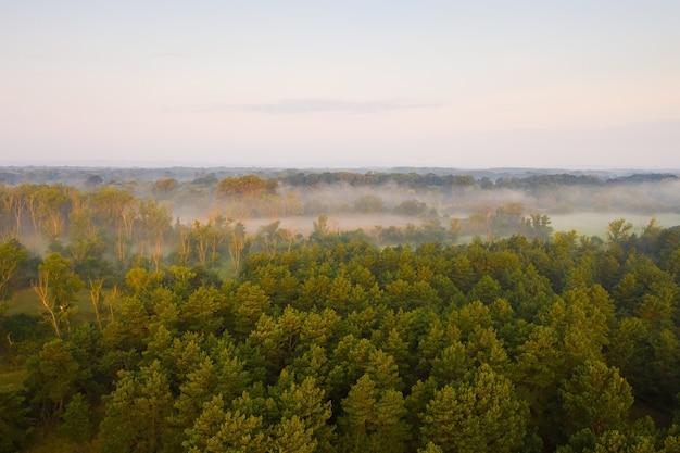 日の出の緑の木々と牧草地の間に霧のある河畔林。