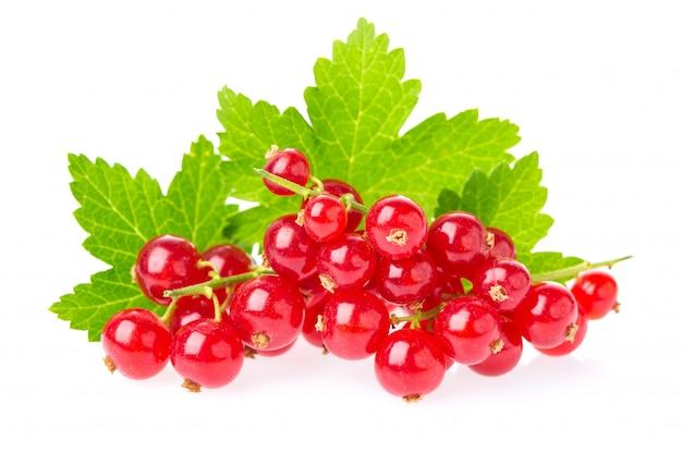 白い背景で隔離の葉で熟したとジューシーな赤スグリの果実。