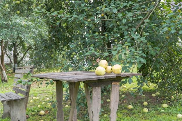 Спелые яблоки на земле и на столе в саду