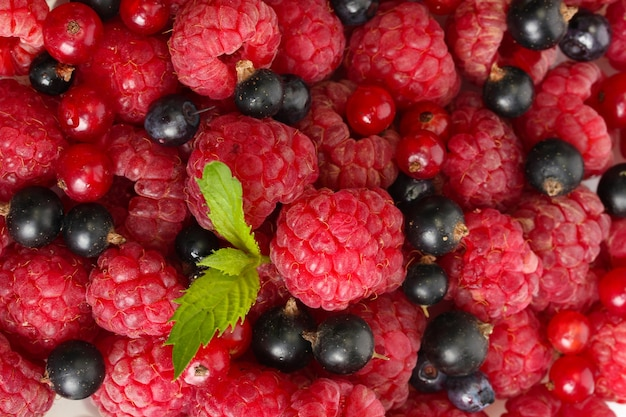 Спелые ягоды с мятой