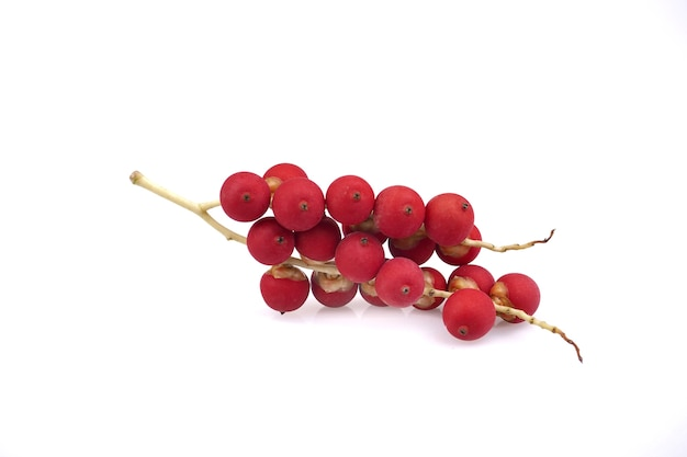 Ripe betel nut red seed balls bunch of palm