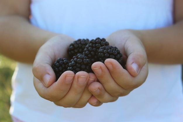 Ripe blackberries in children palms