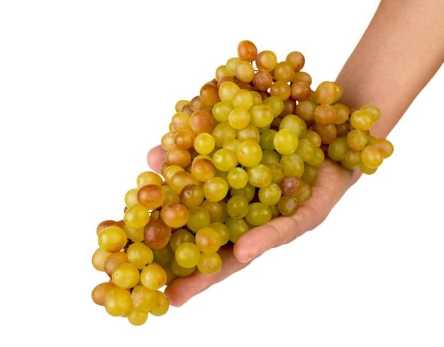 Спелая гроздь винограда в руке на белой предпосылке. изолированный.
