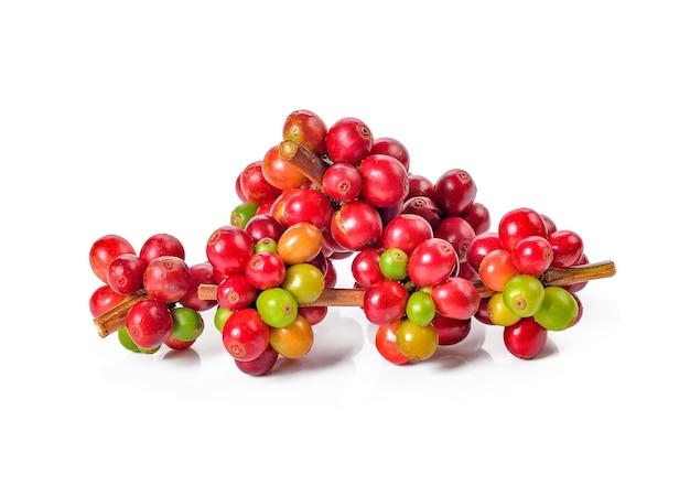 白い背景の上の熟したコーヒー豆