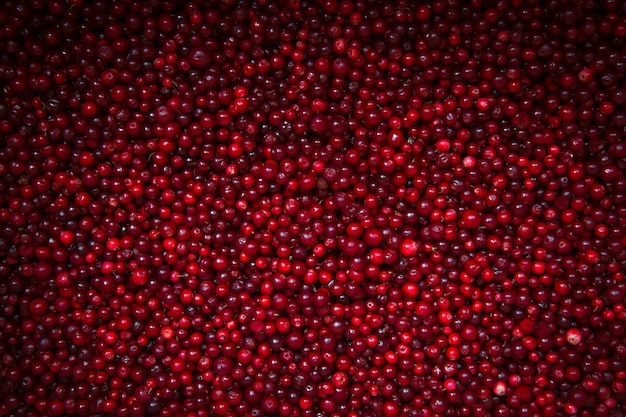 Ripe cranberries on background with vignette