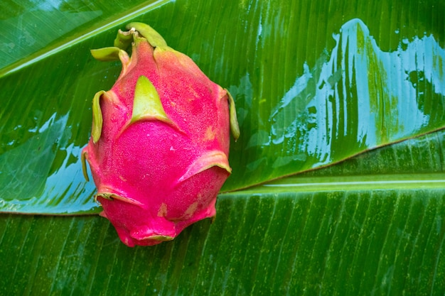 Ripe dragon fruit on wet green leaf. vitamins, fruits, healthy foods.