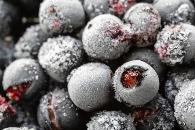 Ripe frozen sweet black currant, blackcurrant, yoshta with hoarfrost. natural organic healthy food.
