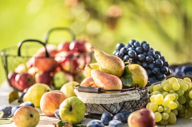 정원에 있는 테이블에 익은 과일. 다양한 정원 과일로 둘러싸인 바구니에 신선한 배.