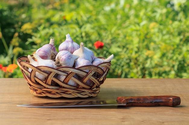 고리버들 바구니에 익은 마늘과 천연 녹색 배경을 가진 나무 판자에 스테인리스 스틸 칼. 방금 수확한 야채입니다.