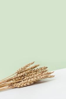 熟した黄金の小麦の穂は、穀物植物の熟した穂でパステルカラーの背景を閉じます