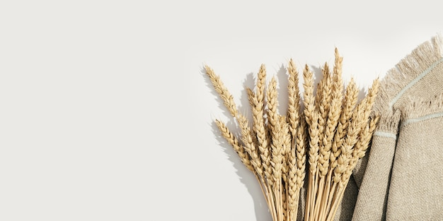 Ripe golden wheat ears close up ripening ears pf cereal plant on sack and white background