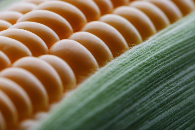 Ripe grains of golden corn closeup